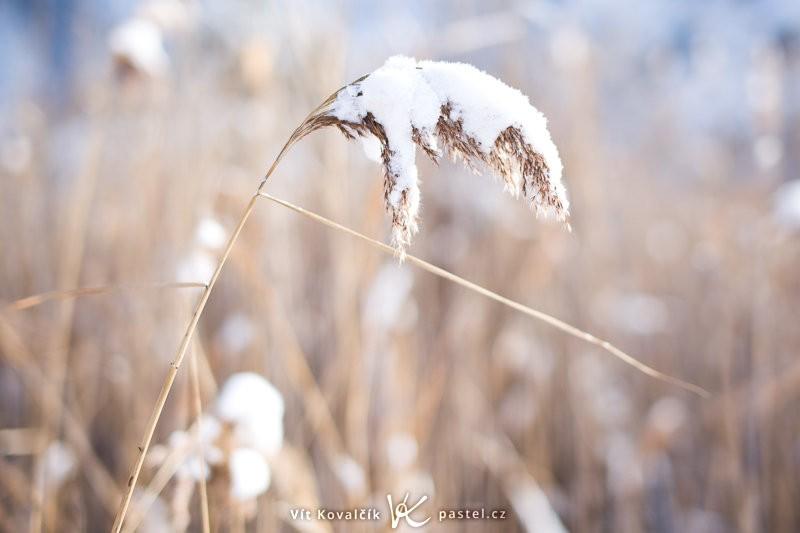 Ještě jeden příklad brzké zimy. Canon EOS 5D Mark II, Sigma 50 mm F1,4, 1/640 s, F1,8, ISO 100, ohnisko 50 mm.