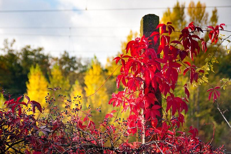 Některé rostliny mají tak výrazné barvy, že se nedají ani věrně zachytit. Canon 40D, Sigma 18–50 mm F2,8, 1/640 s, F2,8, ISO 100, ohnisko 50 mm.