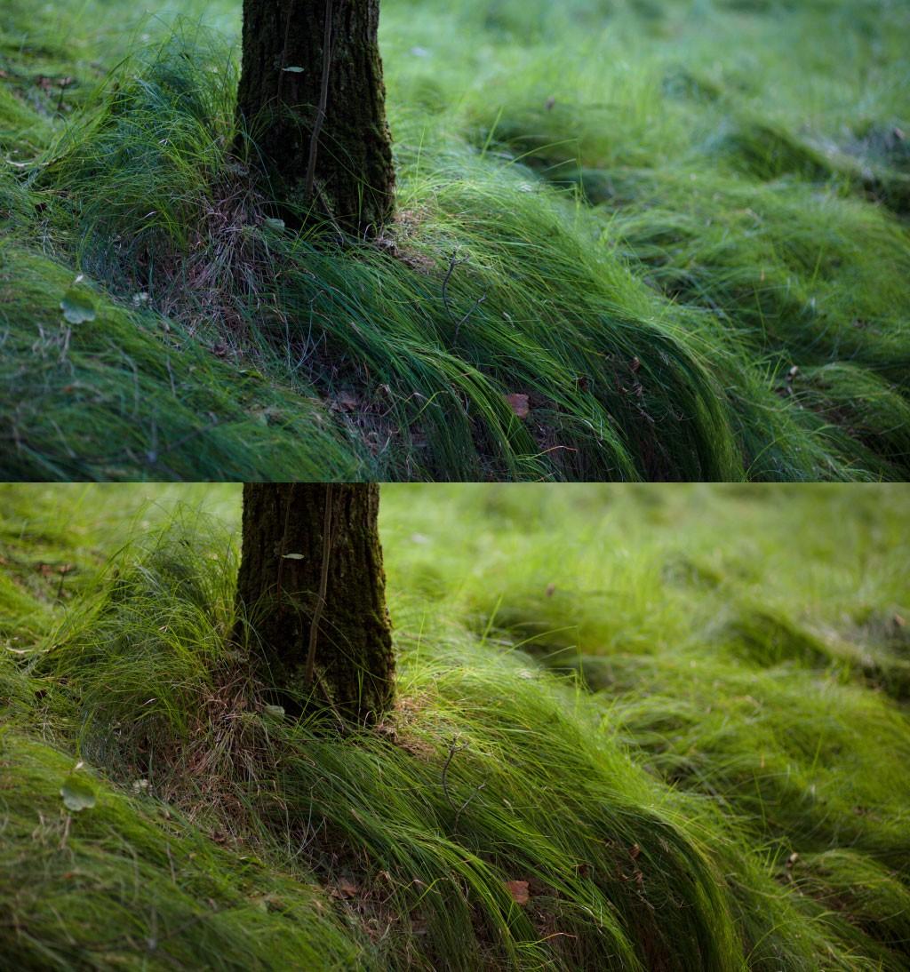 Nahoře originální snímek s teplotou 4 300 K a dole upravený s novou teplotou 5 400 K. Canon 5D Mark III, Canon EF 85/1.8, 1/80 s, f/8.0, ISO 500, ohnisko 85 mm