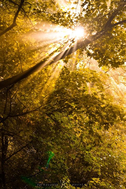 Světlo pronikající skrze listí je skoro vždy efektní. Canon 40D, Sigma 18–50 mm F2,8, 1/25 s, F5,0, ISO 200, ohnisko 50 mm.