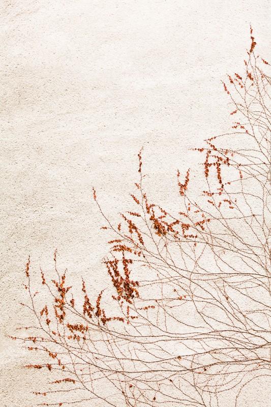 Detail popínavé rostliny na anonymní zdi. Canon 5D Mark II, EF Canon 70–200 mm F2,8 IS II, 1/60 s, F4,5, ISO 160, ohnisko 70 mm.