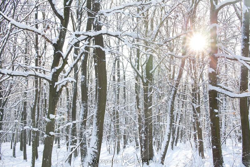Polední slunce viditelné skrz zasněžený les. Canon EOS 5D Mark II, Sigma 50 mm F1,4, 1/20 s, F9,0, ISO 200.