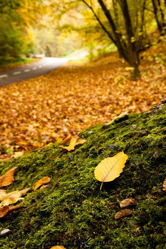 List s podzimní krajinou v pozadí. I přes clonu F8 je pozadí stále rozmazané. Canon 40D, Sigma 18–50 mm F2,8, 1/13 s, F8,0, ISO 200, ohnisko 29 mm.