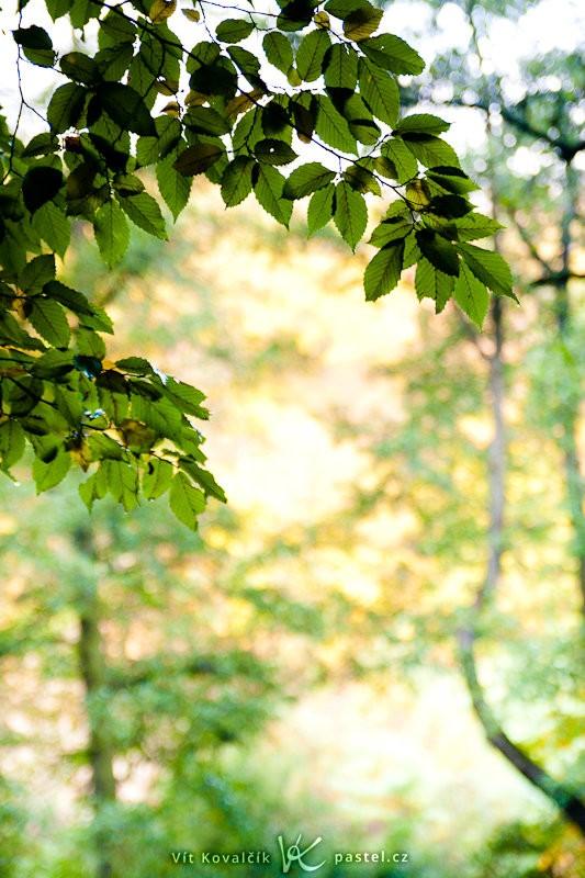 Zaostřením na blízko dostaneme fotku, která by se dobře hodila třeba jako podklad pro podzimní oznámení. Canon 40D, Sigma 18–50 mm F2,8, 1/50 s, F2,8, ISO 400, ohnisko 50 mm.