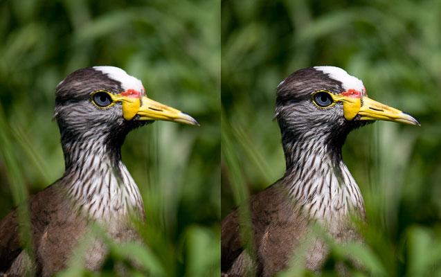 Výstupní doostření bylo použito jen na obrázku vpravo (možná lehce přehnané). Ve srovnání s ním vypadá fotografie vlevo rozmazaně.