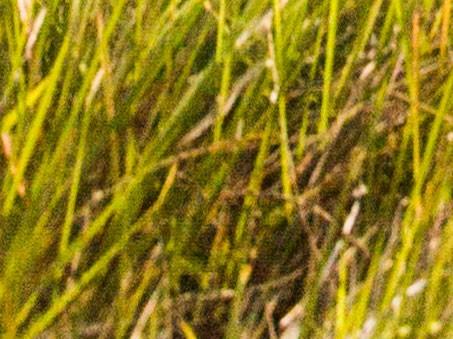 Šum v trávě (výřez ze snímku výše).